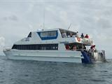 Dolphin Wild Island Cruises